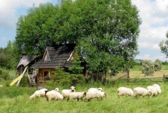 Villa-Gorsky-barany-ogrod